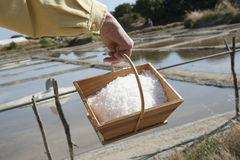 Seasalt just harvested from a salt pan. Freshly harvested salt in a wooden box Stock Image