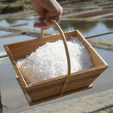 Seasalt just harvested from a salt pan. Freshly harvested salt in a wooden box with a backdrop of a salt pan Royalty Free Stock Photography