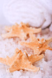 Seasalt, towel and starfish Stock Images