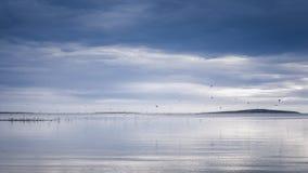 Seasapewith horizon and birds Royalty Free Stock Image
