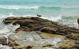 Seascape με ένα ανατολικό πουλί ερωδιών σκοπέλων στοκ φωτογραφία