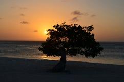 Seascape ηλιοβασιλέματος με ένα σκιαγραφημένο δέντρο Στοκ φωτογραφία με δικαίωμα ελεύθερης χρήσης