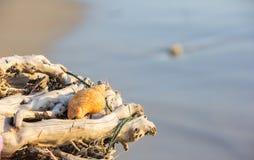 Seascape και κοχύλι Στοκ εικόνα με δικαίωμα ελεύθερης χρήσης