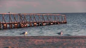 Seascape Να εξισώσει τον περίπατο κατά μήκος της ακτής Φύση φθινοπώρου ειρήνευσης Υπόλοιπο seagulls στο κιγκλίδωμα της αποβάθρας, απόθεμα βίντεο
