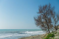 Seascape Παραλία χαλικιών και ένα δέντρο ευθεία ο απότομος βράχος Στοκ εικόνα με δικαίωμα ελεύθερης χρήσης