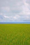 Seascape του ρυζιού Στοκ εικόνες με δικαίωμα ελεύθερης χρήσης