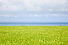 Seascape του ρυζιού Στοκ φωτογραφία με δικαίωμα ελεύθερης χρήσης