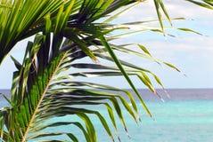 Seascape Багамских островов красивый с ладонью на переднем плане стоковая фотография