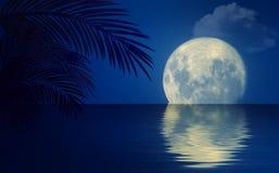 Seascape ночи с пальмами иллюстрация штока