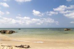 Seascape с стволом дерева стоковые изображения