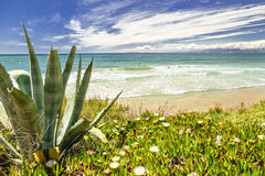 Seascape. Cactus and flowers against the sea Stock Images