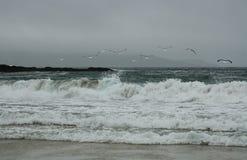 seascape arkivbilder