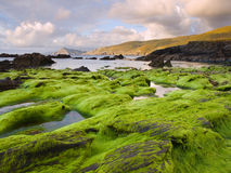 Seascape with algae in the foreground. Royalty Free Stock Photos