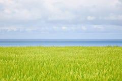 Seascape av ris Royaltyfri Fotografi
