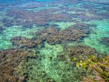 Seascape błękitnego turkusu jasnego oceanu tropikalna rafa i woda Roatan wyspa, Honduras zdjęcie stock