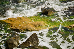 Seascape seagrass background. Calm seascape of waves splashing on the rocks, covered with seaweeds Stock Photography