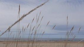 Seascape, Baltic Sea, Spring stock footage