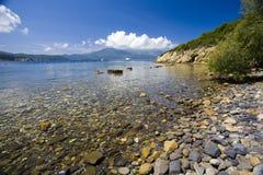 Seascape. Beach and tree in Elba Island Stock Photography