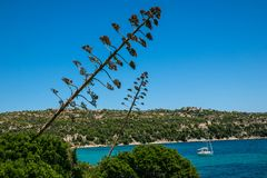 Seascape on beautiful summer, suny day with unusual plants and the boat in the middle of the bay. stock photography