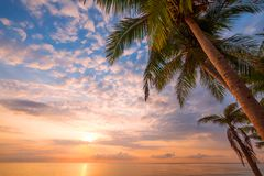 Coconut palm tree on tropical beach seascape in summer. royalty free stock images