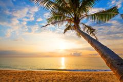 Seascape of beautiful tropical beach with palm tree at sunrise. Sea view beach in summer background Stock Photos