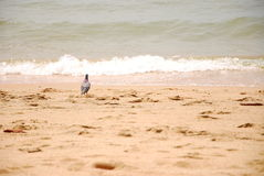 Seascape and bird in east of Thailand Royalty Free Stock Photo