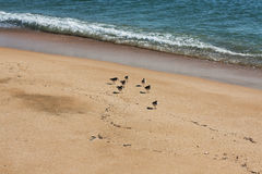 Seascape with birds Royalty Free Stock Image