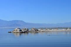 Seascape with Birds. At the Salton Sea Stock Photos