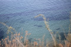 Seascape Black Sea, Odessa Arkivfoton
