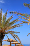 Seascape with blue sky, palm tree Royalty Free Stock Image