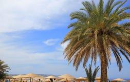Seascape with blue sky, palm tree Stock Photos