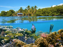 Seascape in Bocas del toro. Surface and underwater view with coral, fish, a hut and coconuts trees, Bocas del Toro, Panama Stock Photo