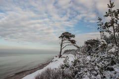 Seascape bonito do inverno Pinho no litoral Báltico Fotografia de Stock Royalty Free