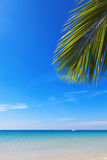 Seascape and coconut palm branch. Coconut tree branch against the blue sky and sea Royalty Free Stock Images
