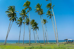 Seascape and coconut tree Royalty Free Stock Image