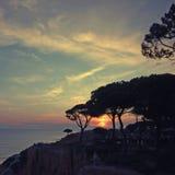 Seascape com as silhuetas dos pinhos e do por do sol dramático Imagem de Stock