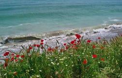Seascape com papoilas Fotografia de Stock