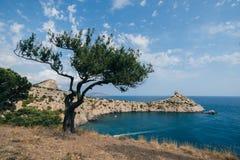 Seascape com pinho e cabo Kapchik Crimeia no verão fotografia de stock