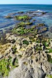 Dead coral reefs with alive algae on it stock image