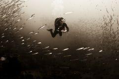 Seascape do mergulhador foto de stock