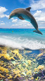 Seascape with Dolphin royalty free stock photography