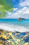 Seascape with  Dolphins Royalty Free Stock Photos
