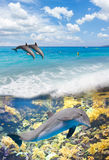 Seascape with Dolphins Royalty Free Stock Image
