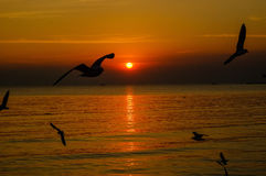 Seascape dramático e gaivotas no céu do por do sol Fotografia de Stock Royalty Free