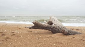 Seascape and dried tree branch. On the beach stock footage