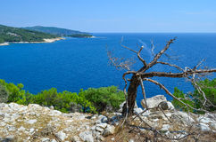 Seascape and dry tree Stock Image
