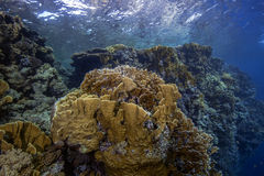 Seascape of fire coral reef Royalty Free Stock Images
