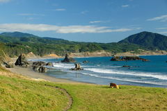 Seascape in Gold beach Royalty Free Stock Photos