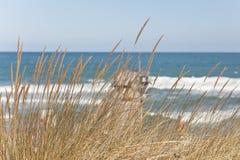 Seascape with grass. Wild grass grows on the sea coast. Seascape Stock Photo