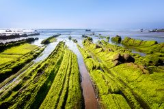 Seascape with green seaweed moss on rocks in Barrika. Seascape with green seaweed moss on the rocks in Barrika royalty free stock image